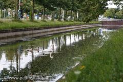 Zwanengezin in Zwolle verhuist